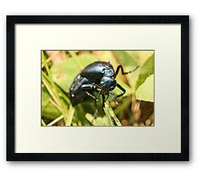 Black Insect 2 Framed Print