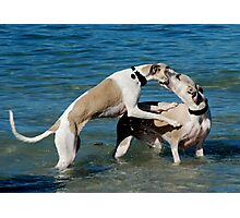 Whippets at Play Photographic Print