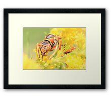 Wasp Closeup Framed Print