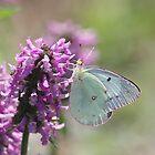 Butterfly by rasnidreamer