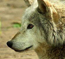 Wolf Profile by Mark Hughes