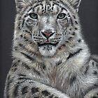 Arts & Cats - Cats Portraits by Nicole Zeug by Nicole Zeug