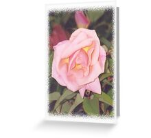 A pale pink rose Greeting Card