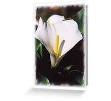 Arum Lily Greeting Card
