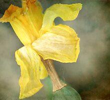 Daffodil by Sandra Hobbs