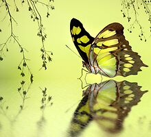 Malachite reflections by Lyn Evans
