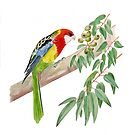 Rosella and Gumnuts by Maureen Sparling