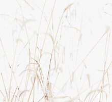 Winter Grasses by Michael  Dreese