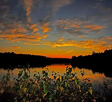 A Night of Color by Paul Gitto