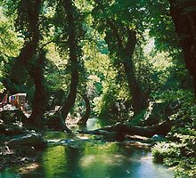 Forest glade in western Turkey by Alex Cassels