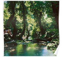 Forest glade in western Turkey Poster