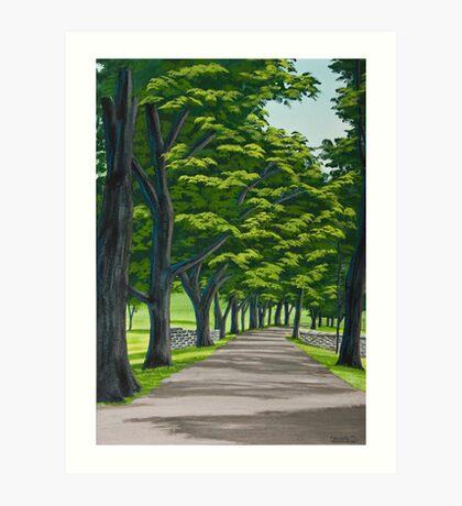 Oak Drive Art Print