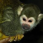 Curious (Squirrel Monkey) by Robert Miesner