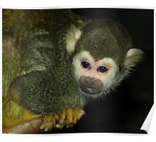 Curious (Squirrel Monkey) Poster