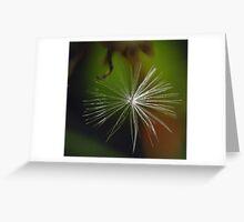 Dandelion (macro) Greeting Card