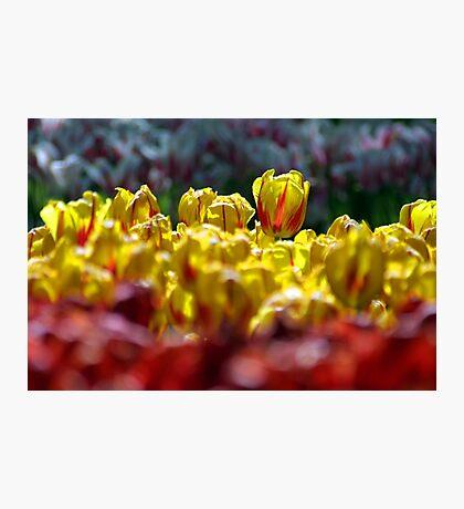Yellow Red Photographic Print