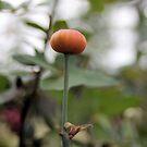 Rose Hip by SuddenJim