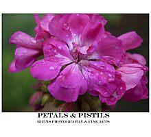 petals & pistils Photographic Print