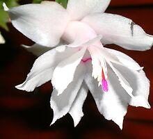 White Flower by Paul  Green