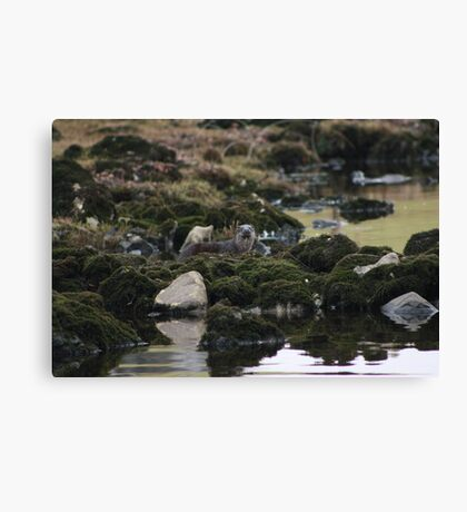 Irish otter Canvas Print