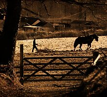 A Country Scene by Country  Pursuits