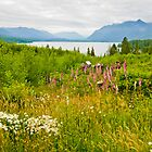 Lake Quinault Wildflowers by mikeno