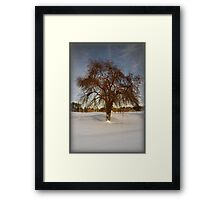 Frozen Apples 2 Framed Print