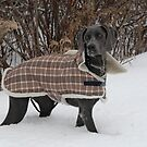 Boscoes new coat by creativegenious