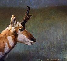 midnight threat / pronghorn buck by R Christopher  Vest