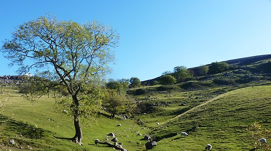 Littondale Another Aspect by Colin Metcalf