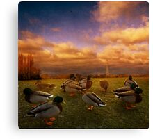 More Ducks Canvas Print