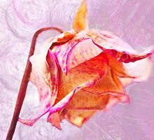 Rose by RosiLorz