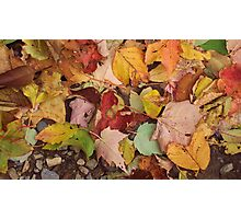 The Fallen Leaves of Autumn Photographic Print