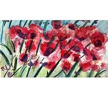 Poppies In Bloom Photographic Print
