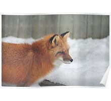 Fox #3 Poster