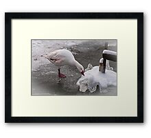 'Duck' ... it's cold out! Framed Print