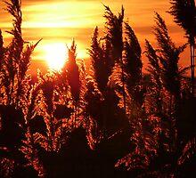Glowing Reeds by Meladana
