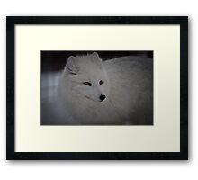 Snowy White Fox Framed Print