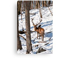 Red Deer in Forest Canvas Print