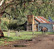 Frys Hut, Howqua Hills, Australia by Michael Boniwell