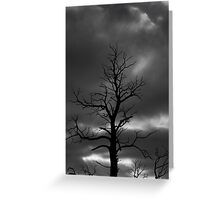 Drama Tree  Greeting Card
