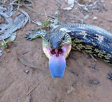 Well Blah to you! Mountain blue-tongue skink, Tiliqua nigrolutea by orkology