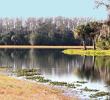 Harnes Marsh Glass Pond by Rosalie Scanlon