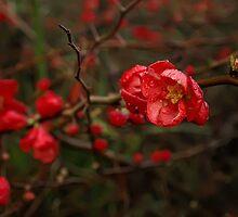 Winter Reds by Leasha Hooker