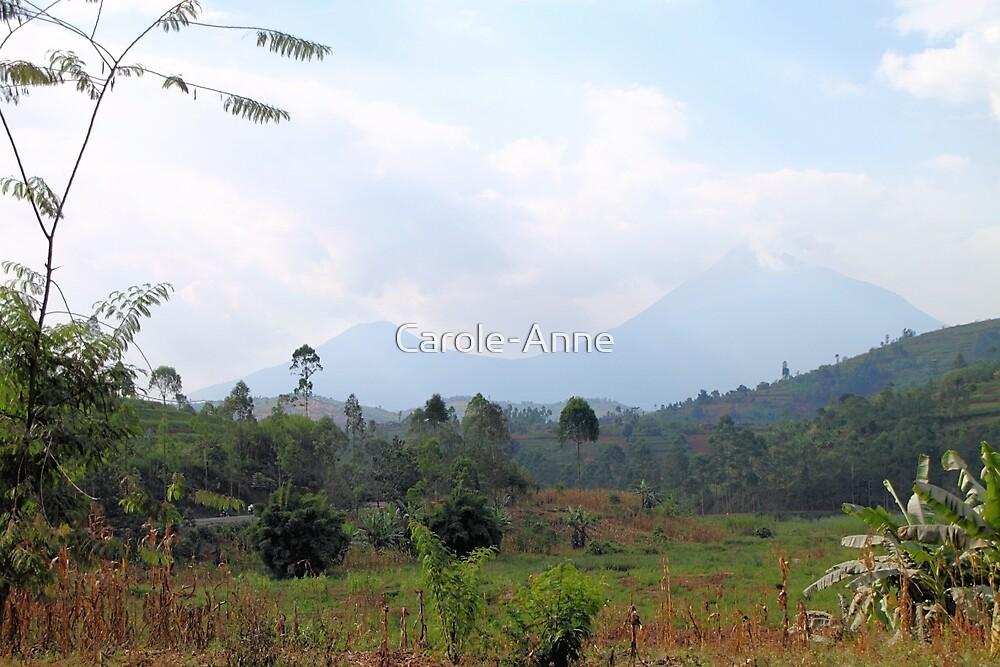 Volcanos National Park Rwanda, East Africa  by Carole-Anne
