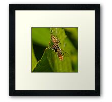 Spider Eating Fly Framed Print