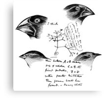 Darwin's Finches Canvas Print