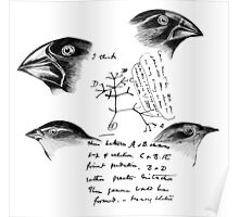 Darwin's Finches Poster