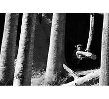 mysterious chimp Photographic Print