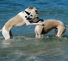 Telling doggy secrets by Richard Shakenovsky